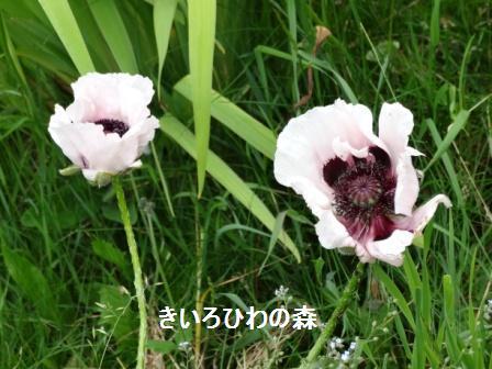 2012juillet14_2