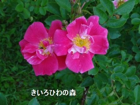 2012juillet14_12