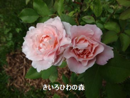 2012juillet14_19
