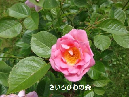 2012juillet14_20