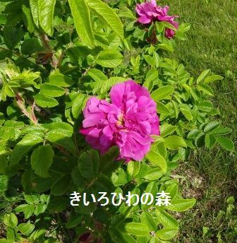 2012juillet14_49