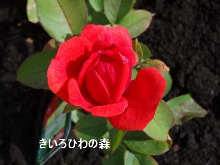2012juillet21_18