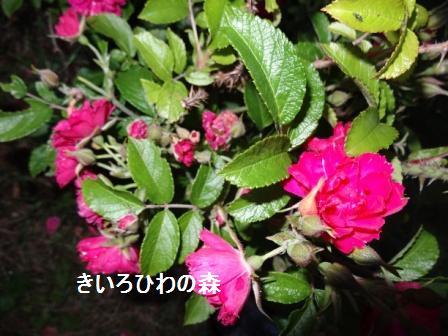 2012juillet21_15