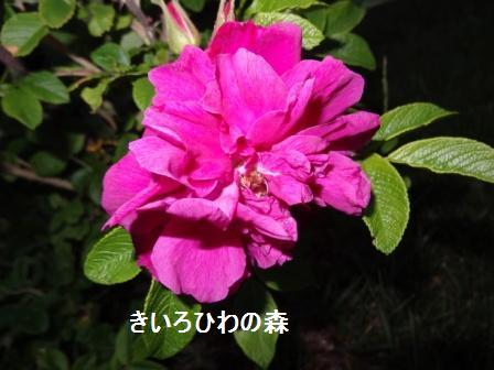 2012juillet21_16