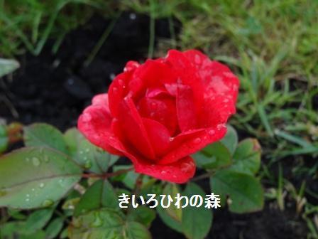 2012_135