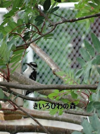2012aout1_12