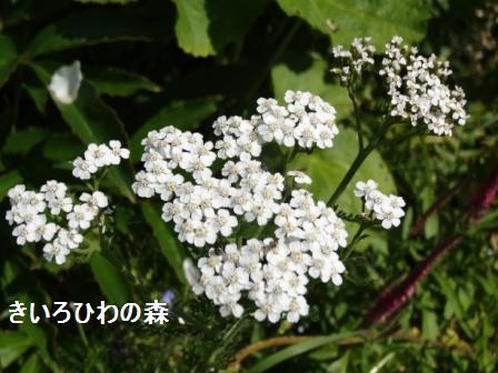 2012aout1_15