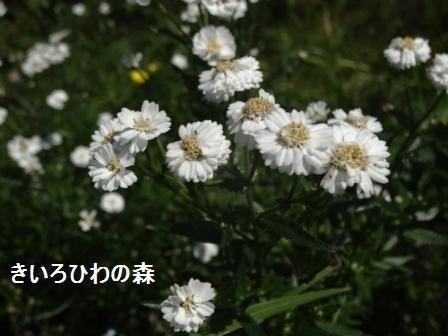 2012aout1_18