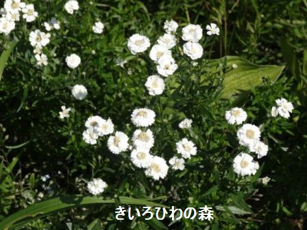 2012aout1_26