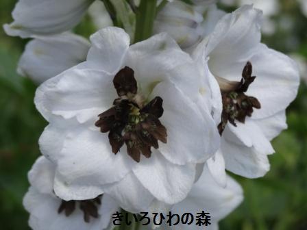 2012aout1_34