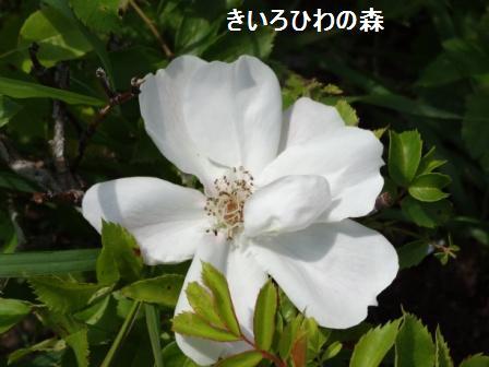2012aout1_35