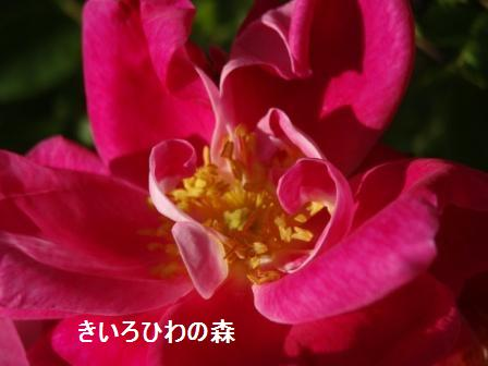 2012aout1_45