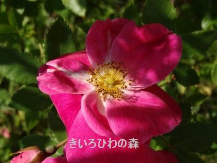 2012aout1_47