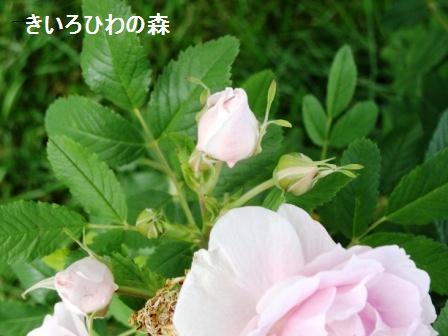 2012aout10_111