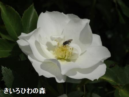 2012aout10_135