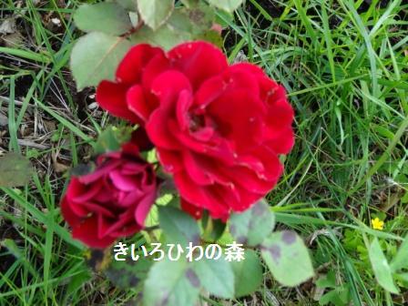 2012aout10_117